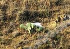 Дивите кактуси на Синеморец