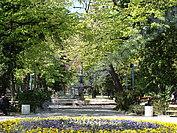Градска градина, Попово