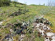 Дивите кактуси на Пушево